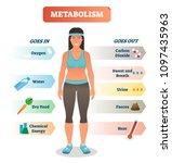 metabolism concept vector... | Shutterstock .eps vector #1097435963