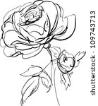 sketch of rose on a white... | Shutterstock .eps vector #109743713