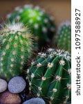 bit spiky with sticking spikes... | Shutterstock . vector #1097588927