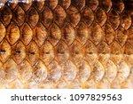 fish scales macro photos | Shutterstock . vector #1097829563