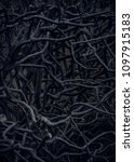 Small photo of Branches of a shrub growing like a they are all tangled up. (dark more mysterious version)