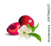 fresh  nutritious and tasty... | Shutterstock .eps vector #1097984237