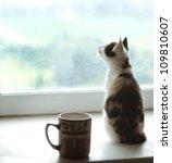 Beautiful Cat Sitting On A...