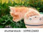 Stock photo cute kitten in flower pot 109812683