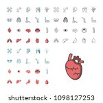 icon set internal organs and...   Shutterstock .eps vector #1098127253