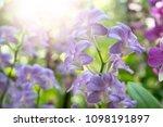 orchid flower garden   Shutterstock . vector #1098191897