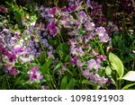 orchid flower garden   Shutterstock . vector #1098191903