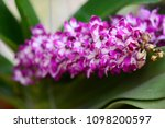 orchids bloom brace reflect the ...   Shutterstock . vector #1098200597