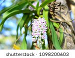 orchids bloom brace reflect the ...   Shutterstock . vector #1098200603