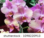 beautiful orchid flowers on...   Shutterstock . vector #1098220913