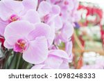 beautiful soft pink and violet...   Shutterstock . vector #1098248333