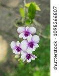 a bouquet of beautiful purple...   Shutterstock . vector #1098266807
