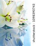 spring flower background with... | Shutterstock . vector #1098390743
