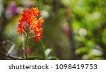 the bloom orchids in the garden ...   Shutterstock . vector #1098419753