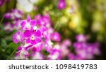the bloom orchids in the garden ...   Shutterstock . vector #1098419783