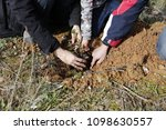 children planting trees in the... | Shutterstock . vector #1098630557