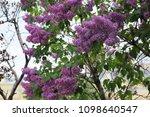 outdoor image of beautiful... | Shutterstock . vector #1098640547