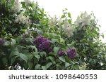 outdoor image of beautiful... | Shutterstock . vector #1098640553
