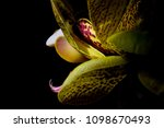 a green orchid with purple...   Shutterstock . vector #1098670493