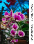 beautiful orchid flower   Shutterstock . vector #1098748937