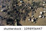dry stony bottom of the tagus... | Shutterstock . vector #1098956447