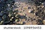 dry stony bottom of the tagus... | Shutterstock . vector #1098956453