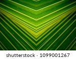 tropical leaf  large foliage ... | Shutterstock . vector #1099001267