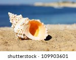 seashell on the beach - stock photo