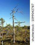 the great kemeri bog.national... | Shutterstock . vector #1099042787