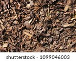 bark texture background         ... | Shutterstock . vector #1099046003