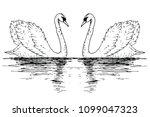 vector swan couple illustration ... | Shutterstock .eps vector #1099047323