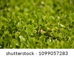green leaves from a different... | Shutterstock . vector #1099057283