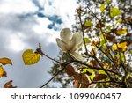 tree nature garden | Shutterstock . vector #1099060457