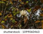 tree nature garden | Shutterstock . vector #1099060463