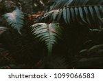 fern forest california | Shutterstock . vector #1099066583