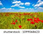 summer sunset at red field of... | Shutterstock . vector #1099068623
