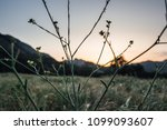 tall grass field as the sunset... | Shutterstock . vector #1099093607