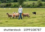 "Small photo of A shepherd and her sheepdog in a sheepdog trial. The sheepdog herds sheep through a set course per the shepherd's commands, such as ""come by"", ""away"", ""walk up"", ""here""..."