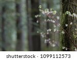 white flowers with a blurry... | Shutterstock . vector #1099112573