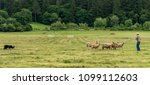 """Small photo of Scio, Oregon/USA - May 20, 2018: In a sheepdog trial, the sheepdog herds sheep through a set course per the shepherd's commands, such as """"come by"""", """"away"""", """"walk up"""", """"here""""..."""