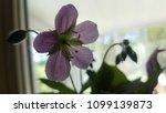 wildflower inside in shade   Shutterstock . vector #1099139873