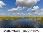florida wetland in the...   Shutterstock . vector #1099141097