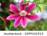 purple jar flower    Shutterstock . vector #1099141913