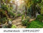 cactus landscape garden in...   Shutterstock . vector #1099142297