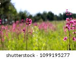 close up of a little violet... | Shutterstock . vector #1099195277