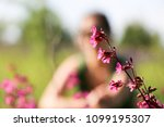 close up of a little violet...   Shutterstock . vector #1099195307