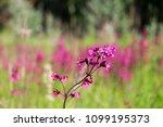 close up of a little violet...   Shutterstock . vector #1099195373