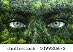 Green Forest And Human Eyes  ...