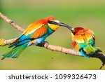 kiss of beautiful colored birds ... | Shutterstock . vector #1099326473