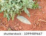 authentic native american... | Shutterstock . vector #1099489667